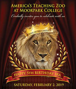 America's Teaching Zoo at Moorpark College Welcomes the Community to Celebrate Ira the Lion's 5th Birthday