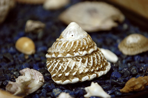 Graphic of shell