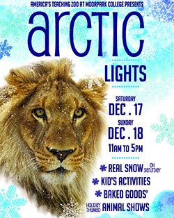 image of flyer for Arctic Lights
