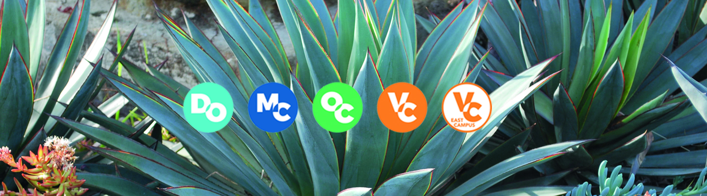 succulents growing with vcccd logos